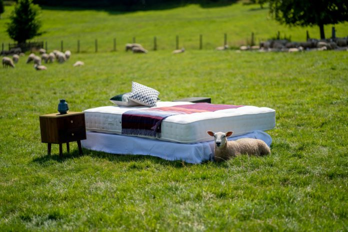 John Lewis Matress Range helping sheep farmers