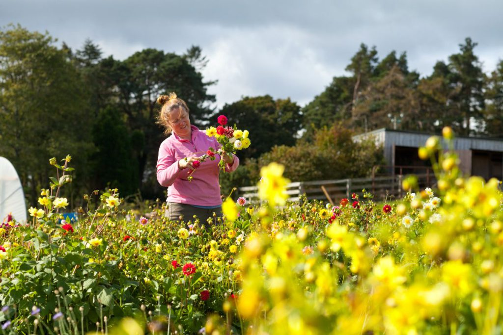 Tara Hill Flowers, owned by Aine Kinsella: All flowers are 100% grown on the slopes of Tara Hill using three ingredients - seed, the seasons and soil.