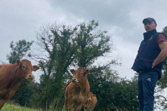 Pedigree Limousin breeder, Alan Fitzgerald