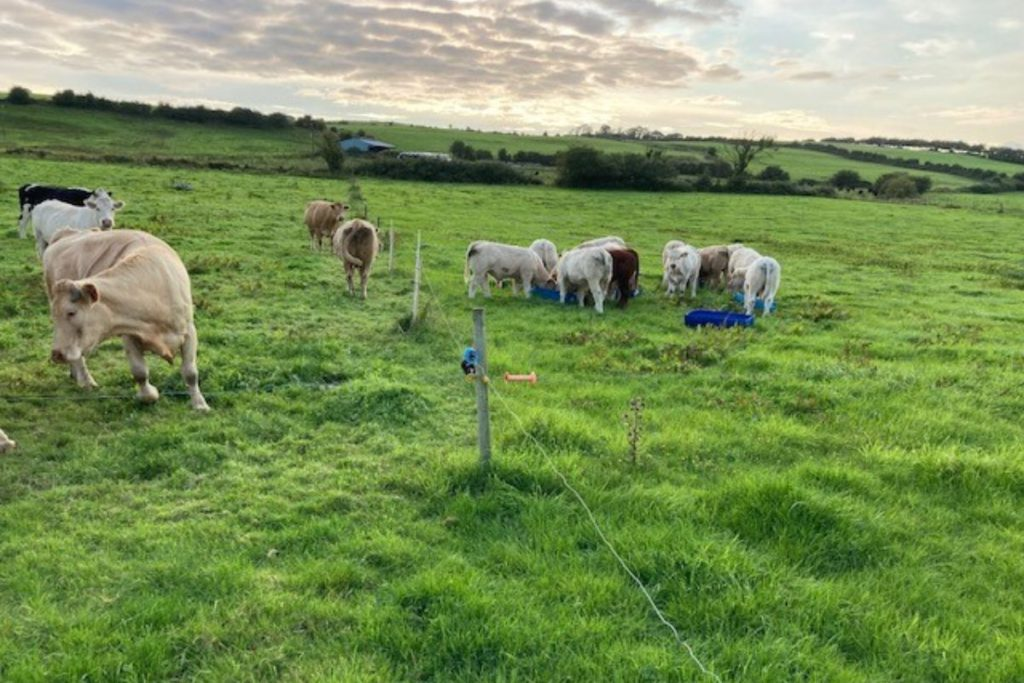 The Davorens, 40-cow suckler farmers, on Charolais-cross genetics, averaging close to €3.00/kg for weanlings, calving heifers at 24-months-old.
