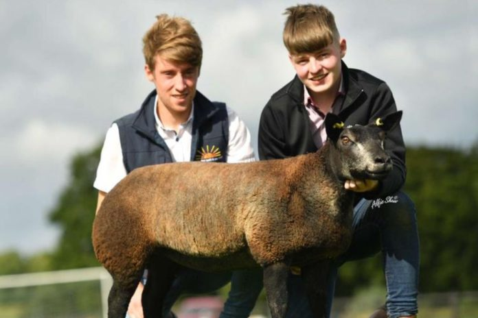 Pedigree Blue Texel breeder, Kevin Swift farms a 100-acre enterprise, with his brothers, Kieran, and Peter Swift, Ballymoe, County Galway.