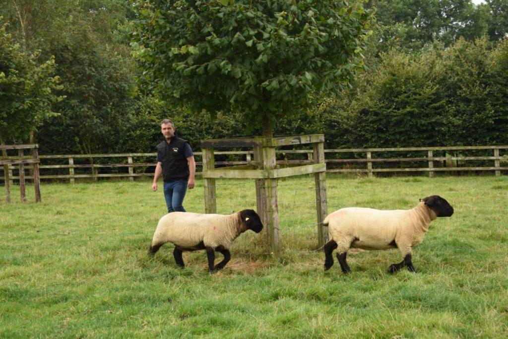 Philip Byrne is a part-time farmer from Windgap, County Kilkenny, who grew up on a dairy farm and runs Limepark Suffolks.(1)