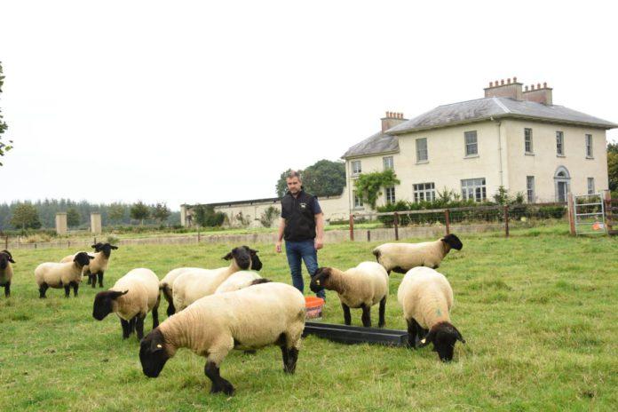 Philip Byrne part-time pedigree Suffolk breeder from Windgap, County Kilkenny