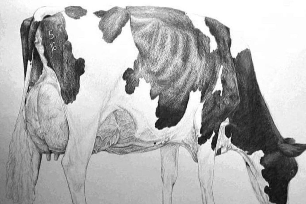 A pencil drawing completed by Robert's daughter Tania, of Eedy CIX Acclaim