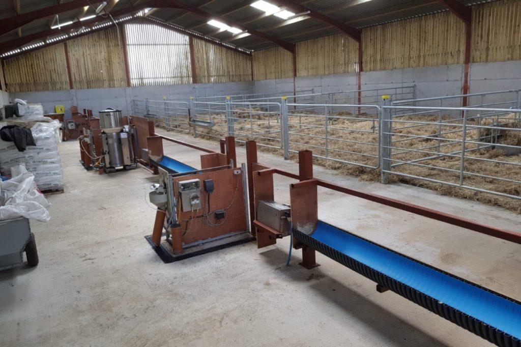 NI suckler farmer, John Egerton and family run 90 cows, 250 ewes and over 500 calves (calf to blade enterprise and contract rearing).
