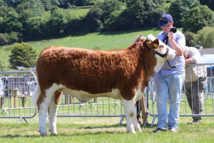 Vet, Killian Farrell, from Suirville Pedigree Cattle, discusses balancing farming with work, 24-months calving, using a CIDR programme and €urostars.