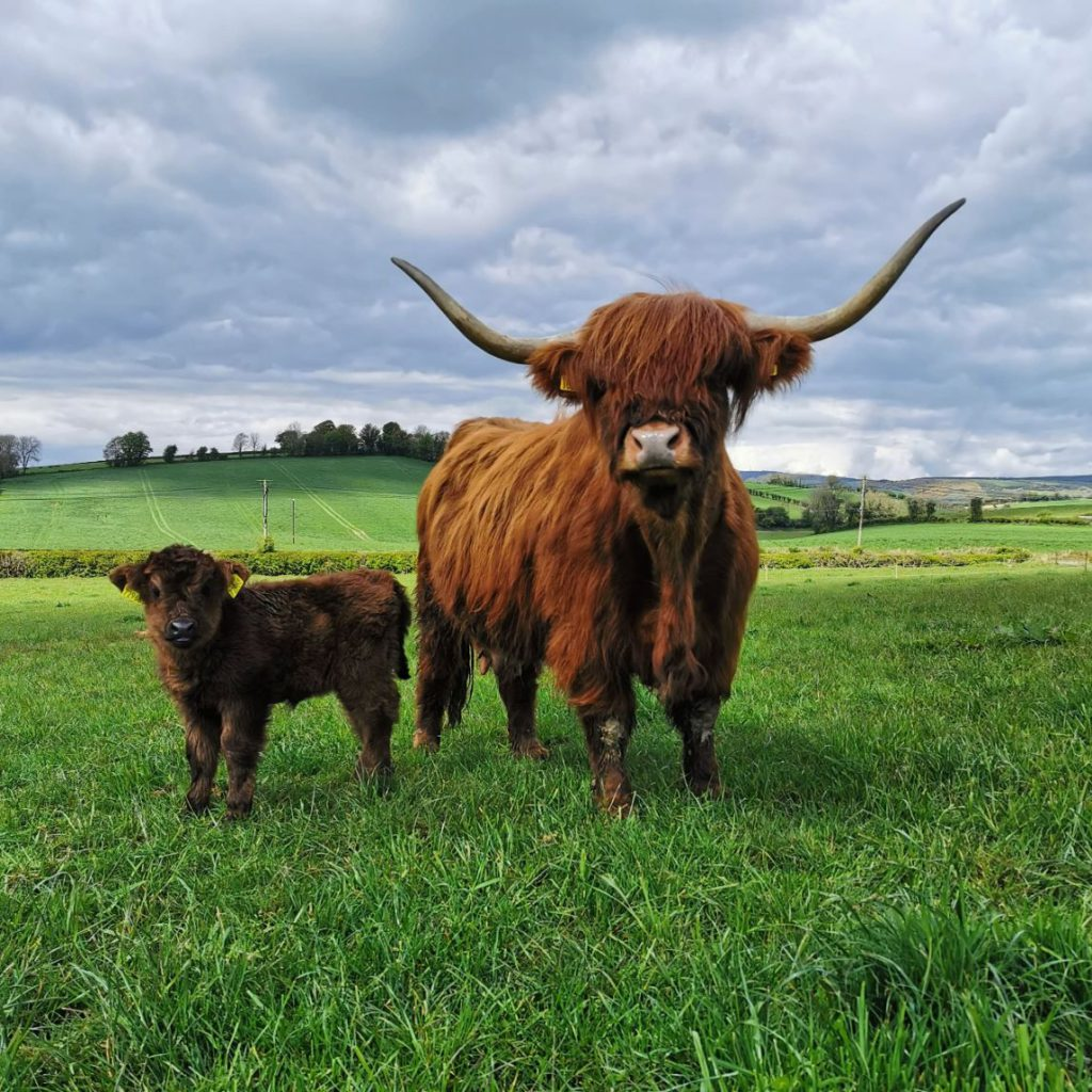 Rachel Rankin is a third-generation sheep and suckler farmer from County Donegal. She owns a seven-strong Highland cattle fold.